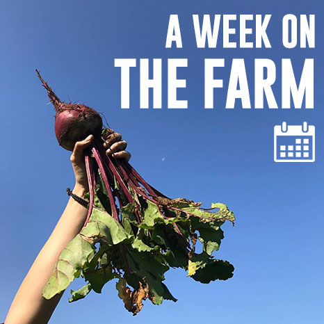A week on the farm